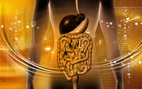 http://www.dreamstime.com/royalty-free-stock-images-digestive-system-image9984999